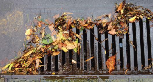 A storm drain clogged because leaves are on the surface