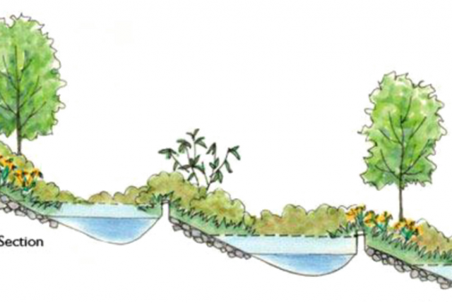 Illustrated cross section of a tiered rain garden